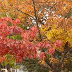 Salt Spring Island, Fall