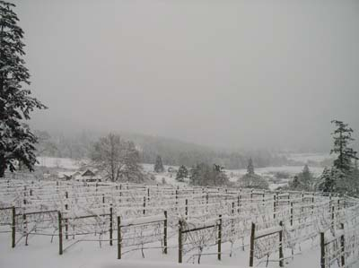 Rare whiteout day on Salt Spring Island